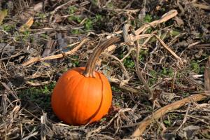 SmallPumpkin